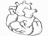 Anatomical Heart Coloring Pages Heart Anatomy Coloring Pages Heart Anatomy Coloring Pages Heart