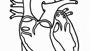 Anatomical Heart Coloring Pages Human Heart Coloring for Kids Health Of Anatomy