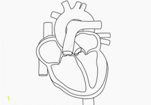 Anatomical Heart Coloring Pages Human Heart Coloring Pages School Motivation Pinterest