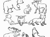 Arctic Animal Coloring Pages Arctic Animals Colouring Pages Polar Animals Coloring Pages Bell