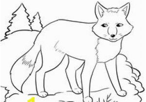 Arctic Animals Coloring Pages 348 Best Arctic Polar Images On Pinterest In 2018