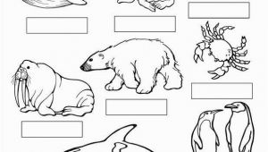 Arctic Animals Coloring Pages Coloring Pages Seals 27 Arctic Animals Coloring Pages Printable