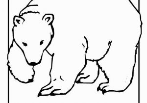 Arctic Animals Coloring Pages Polar Express Coloring Pages Unique Baby Polar Bear Coloring Pages