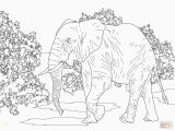 Asian Elephant Coloring Page Adult Elephant Coloring Pages