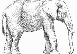 Asian Elephant Coloring Page Elephant Printable Bire 1andwap