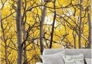 Aspen Tree Wall Mural 234 Best Tree Mural Images