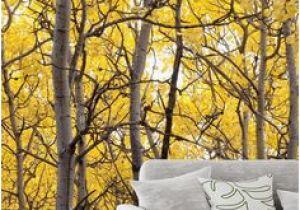 Aspen Tree Wall Mural 234 Best Tree Mural Images