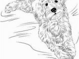 Australian Shepherd Coloring Page 286 Best Dog Coloring Pages Images