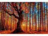 Autumn forest Wall Mural 2019 Autumn forest Path Nature Art Silk Furniture Bar Family Wall Decoration Hot Sale Popular Poster 2 From Poster2021 $8 93