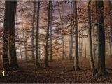 Autumn forest Wall Mural Autumn In the forest Fototapeta Tapeta Na Zeď Na Posters