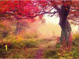 Autumn forest Wall Mural Tree Wall Mural Tree Wallpaper Nature Wall Mural Nature