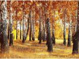 Autumn forest Wall Mural Wall Murals