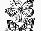 B is for butterfly Coloring Page Coloring Pages Free Printable Coloring Pages for Children that You