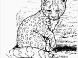 Baby Cheetah Coloring Pages Color Pages Realistic Cheetah Coloringageshoto