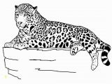 Baby Cheetah Coloring Pages Txt Descargar Free Printable Cheetah Coloring Pages for Kids