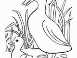 Baby Duck Coloring Pages to Print Baby Duck Coloring Pages to Print Best Ducks Free oregon