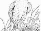 Bald Eagle Coloring Page Coloring Pages Bald Eagles Coloring Pages Bald Eagles Bald Eagle
