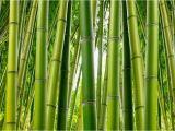Bamboo Wall Mural Wallpaper Bamboo Serenity Wallpaper Mural Murals
