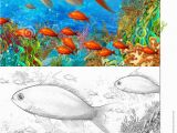 Barrier Reef Coloring Pages the Coral Reef Small Colorful Coral Fishes with Coloring