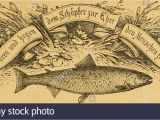 Bass Fish Coloring Pages Ocr Stock S & Ocr Stock Page 4 Alamy