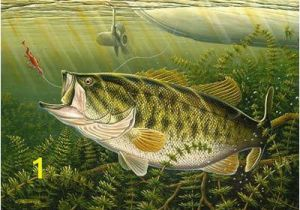 Bass Fishing Wall Murals Paintings Of Large Mouth Bass