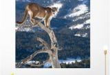Big Cat Wall Murals Mountain Lion Od Dead Wall Mural by Wallmonkeys Peel and