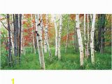 Biggies Wall Mural Biggies Wall Mural 40 X 80 aspen Grove by Fice Depot & Ficemax