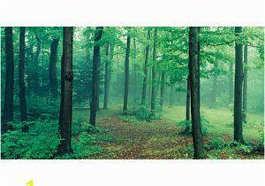 Biggies Wall Mural Biggies Wall Mural 40 X 80 Misty forest Fice Depot