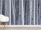 Birch forest Wall Mural Silver Birch Wallpaper Birch Tree forest