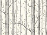 Birch Tree Wall Mural Target Cole & son Whimsical Woods & Stars 103 R Room