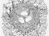 Bird Egg Coloring Page Coloring Page with A Nest and Birds Eggs