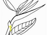 Bird Of Paradise Coloring Page 132 Best Bird Of Paradise Images On Pinterest In 2018