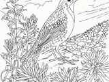 Bird Of Paradise Coloring Page 30 Fresh Bird Paradise Coloring Page