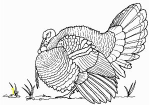 Black and White Turkey Coloring Pages Deep Wild Turkey Coloring Page