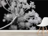 Black and White Wall Murals for Cheap Black and White Dandelions Wall Mural Wall Paper