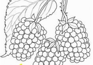Blackberry Coloring Page Blackberry Branch Coloring Page From Blackberry Category Select