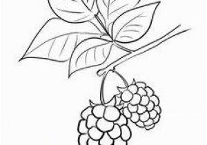 Blackberry Coloring Page Corn Coloring Page Coloring Pages for Free