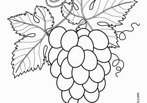 Blackberry Coloring Page Grapes with Leaves Fruits and Berries Coloring Pages for Kids