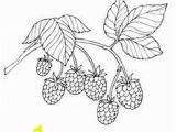 Blackberry Coloring Page Pin by Jane Ertman On Ideas for Dolls Pinterest