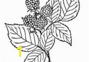 Blackberry Coloring Page Printable Strawberry Coloring Page Free Pdf at