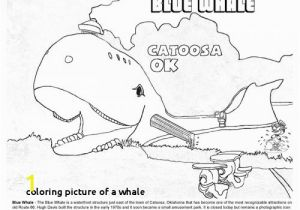 Blue Whale Coloring Page Coloring Picture A Whale Catoosa Oklahoma Blue Whale Coloring