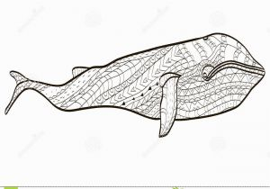 Blue Whale Coloring Page Whale Coloring Vector for Adults Stock Vector Illustration Of