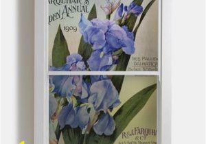 Botanical Wall Murals Uk Iris Pallida Dalmatica Window
