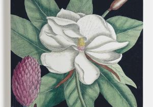Botanical Wall Murals Uk Magnolia Ii Canvas Buds & Blooms