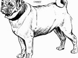 Boxer Dog Coloring Pages Dog Free Clipart 277