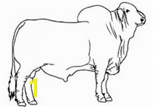 Bucking Bull Coloring Pages Coloring Pages