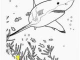 Bull Shark Coloring Page 233 Best Kk Sharks Images In 2019