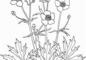 Buttercup Flower Coloring Pages 245 Best Adult Coloring Pages Images