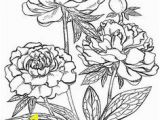 Buttercup Flower Coloring Pages 3161 Best Printables Floral and Plant Life Images In 2019