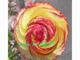 Buttercup Flower Coloring Pages Amazon 100 Pcs Bag Ranunculus Seeds Flower Seeds for Home